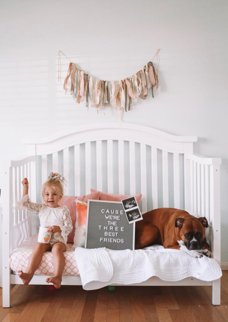 how to announce baby 2 with fur baby