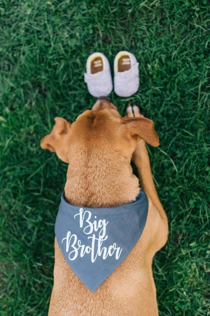 another baby announcement