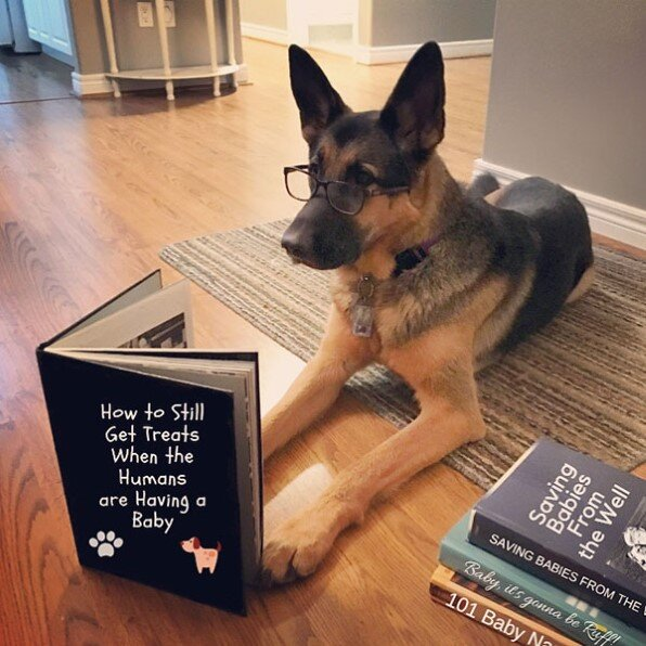 dog getting ready for arrival of baby
